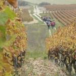 Randonnée dans les vignes, Bourgogne