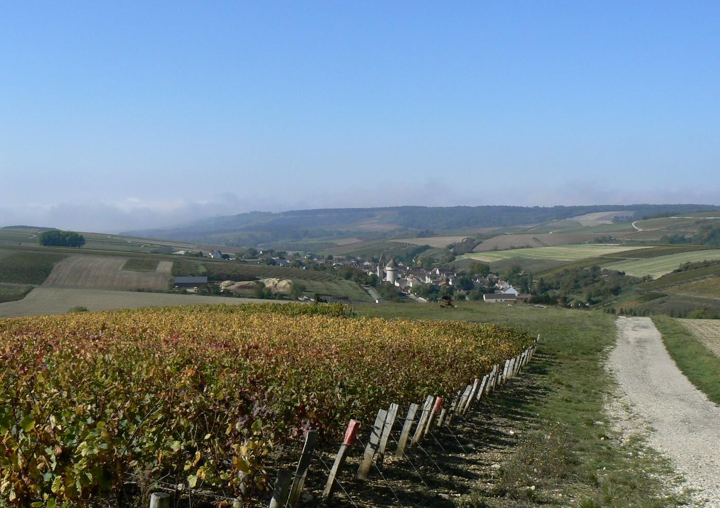 vignoble de Chablis en Bourgogne
