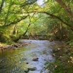Vallée du Cousin, sentiers de la GTM à VTT dans le Morvan