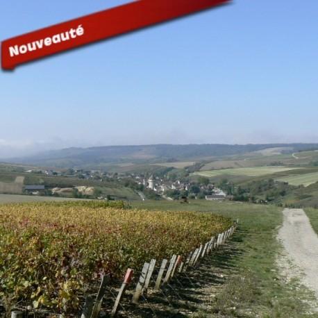 Les vignes de Chitry en Bourgogne