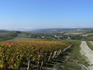vignoble de Chitry en Bourgogne