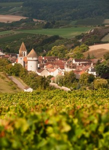 chitry-le-fort-vignes
