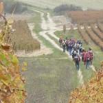 randonnees-pedestre-vignes-chablis-à-pied-bourgogne