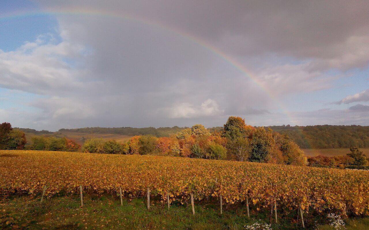 Entre vignobles et canaux, Saint Romain
