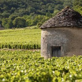 entre-vignobles-et-canaux-savigny